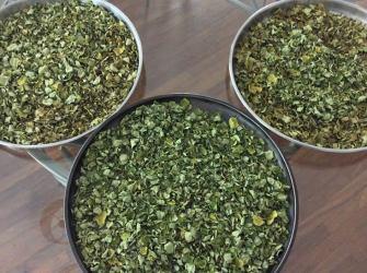 Malunggay tea is Primed2