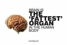 Brain health3