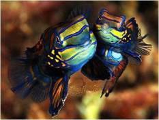Atlantis fish1