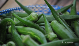 Luntiang Okra