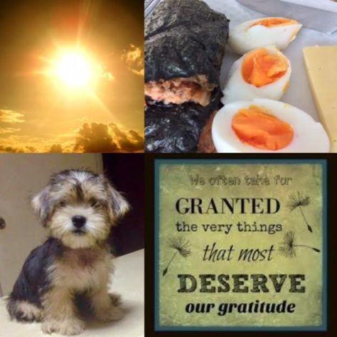 Gratitude daily4