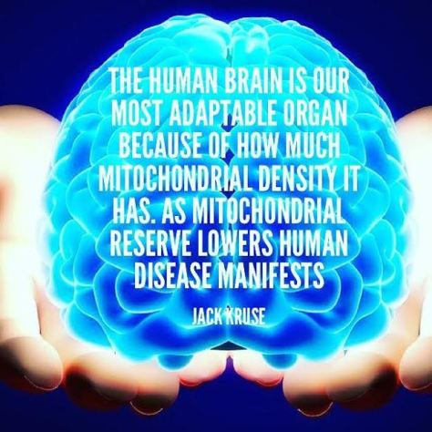 Jack brain