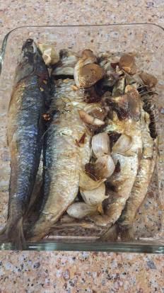 Gigi fish1